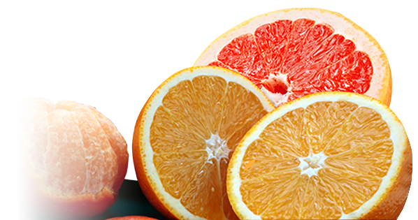 oranges-new